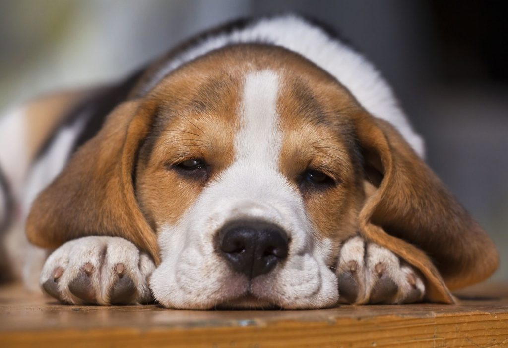 Renting with a Dog   Priority Moving and Storage   San Diego
