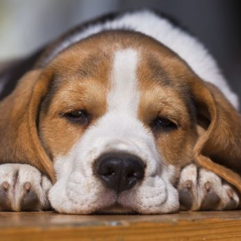 Renting with a Dog | Priority Moving and Storage | San Diego